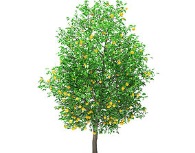 Grapefruit Tree with Fruits 3D