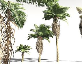 EVERYPlant African Oil Palm 11 -- 10 Models