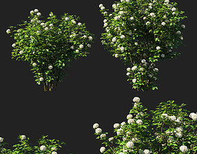 3D model Viburnum dentatum blue muffin