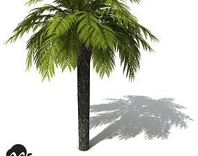 XfrogPlants Tasmanian Treefern 3D