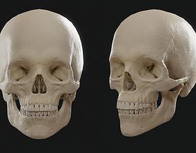 3D asset VR / AR ready Skull