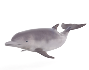 Dolphin 3D fish