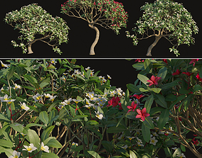 Plumeria rubra 3D model