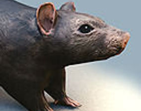 Rat Rigged and Animated 3D asset