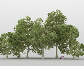 nature 3D Plane Tree Pack 01