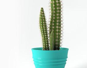 3D model Cereus Cactus