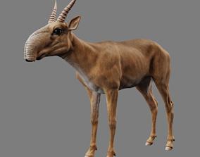 3D model Saiga Antelope Without Bone