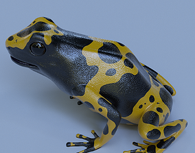 3D model Yellow banded Bumblebee poison dart frog 1