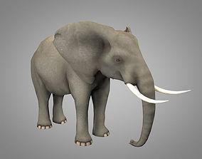 Elephant 3D model animated game-ready