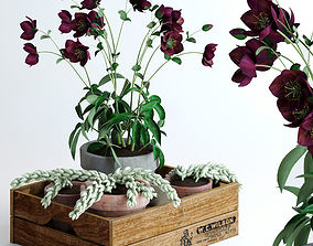 wooden Hellebores and Burros tails in a box 3D model