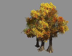 3D Populus euphratica-poplar-special tree 34