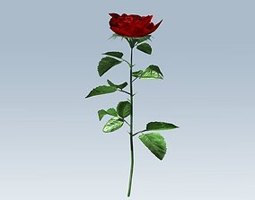 Red rose 3D asset