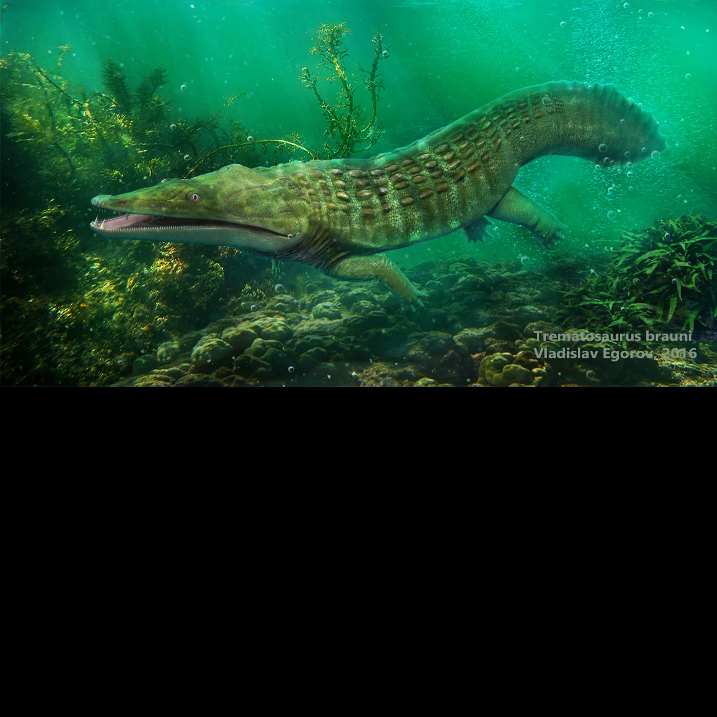 Trematosaurus brauni