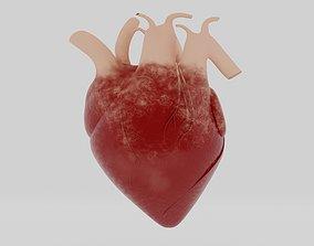 3D model PBR HUMAN HEART