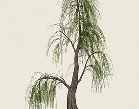 Game Ready Willow Tree 06 3D asset realtime