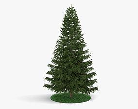 3D model The Pine