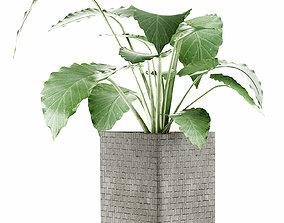 Plants Collection 55 3D