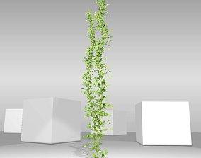 Ivy Vine - Version 2 3D model