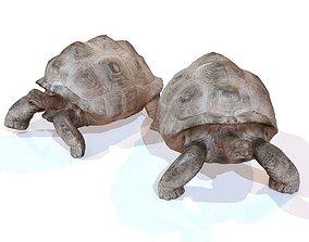 Tortoise Rigged 3D asset