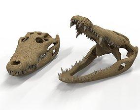 Crocodile skull 3D model