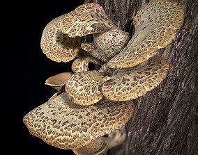 Wood Mushrooms on a Trees - Polyporus Squamosus 3D model
