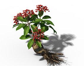 Plant - ginseng 3D