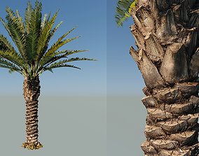 3D Palm tree type7 - A22