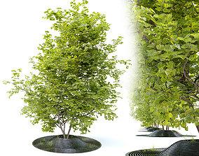 3D Linden tree in metal grate