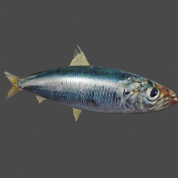 Fish - Peixe