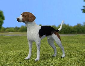 English Foxhound 3D model