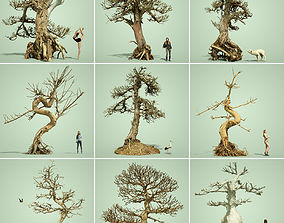 3D asset Dead Tree Collection