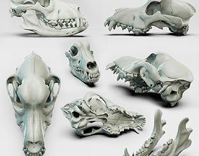 Canine skull for the Medical Area 3D model 3D