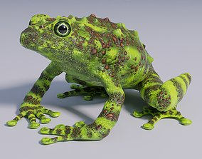 3D asset Vietnamese Mossy Frog - Animated