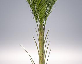 3D model Palm - Metroxylon Sagu