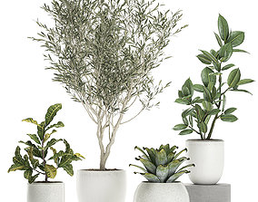 3D Plants in a white pot for the interior 673