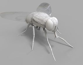Insect Fly 3D