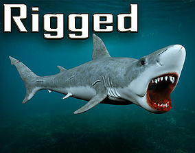 3D asset rigged Great white shark