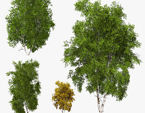 3D asset Birch Tree 01