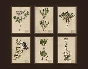 3D asset Herbarium pictures - PBR Game Ready