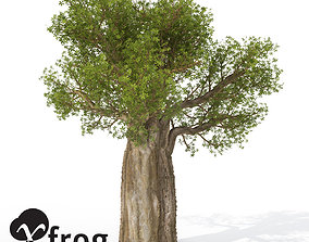 XfrogPlants Baobob 3D model