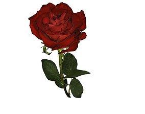 Flower Rose 3D asset