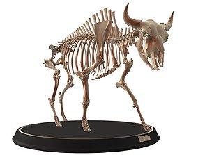 3D model Bison Skeleton