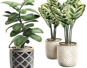 3D Potted plants Set 9