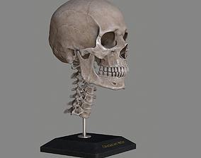 3D asset realtime Human Skull Caucasian Male