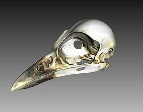 Bird Skull 3D Scan