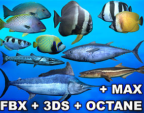 3D asset Ocean Fish Package