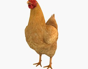 3D animated rooster Chicken