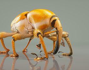 Poteriophorus Monilifasciatus 3D asset VR / AR ready