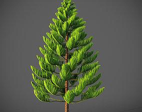 XfrogPlants Norfolk Island Pine - Araucaria 3D