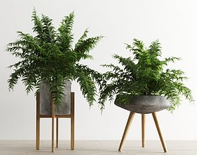 Fern In Concrete Pots 3D
